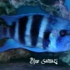 """""""Blue Samazi"""""""