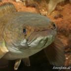 aquafisch24