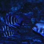 """Blue Samazi"" WF - Gruppe"