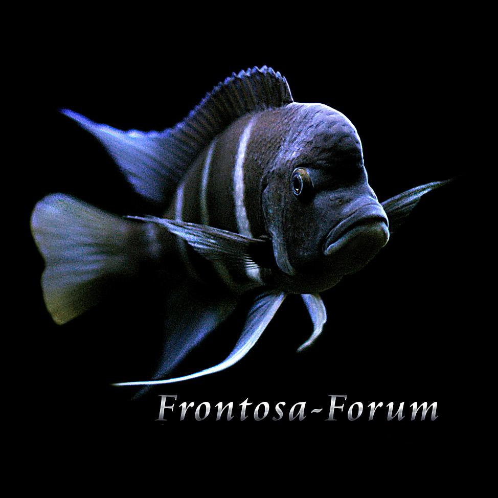 (c) Frontosa-forum.de